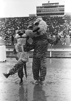 The 1974 Homecoming Version of Truman the Tiger