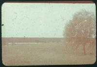 Hiller 09-002 : Field in Nanking, with tree in foreground