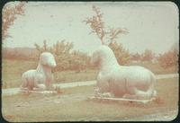 Hiller 09-059 : Sitting horses statues along the Elephant Road in Ming Xiaoling Mausoleum