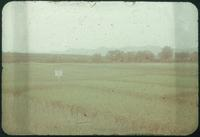 Hiller 09-076: Crop field in Nanking 1