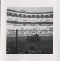 Horses dragging a dead bull out the arena