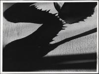 Abstract photograph of shadows