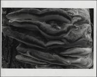Abstract photograph of tree fungus