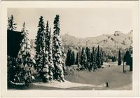 Trees and skiers on Mount Rainier