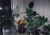 House plants in sunroom at Starr Residence