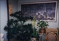 Plant display in Starr Residence