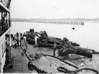 Tree Trunks on the Missouri River, 1935